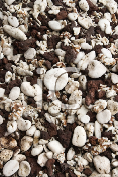 Royalty Free Photo of a Beach Worn Rocks and Shells in Maui, Hawaii, USA