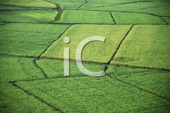 Royalty Free Photo of an Aerial of Sugarcane Crops in Maui, Hawaii