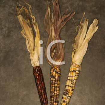 Royalty Free Photo of Three Multicolored Ears of Indian Corn