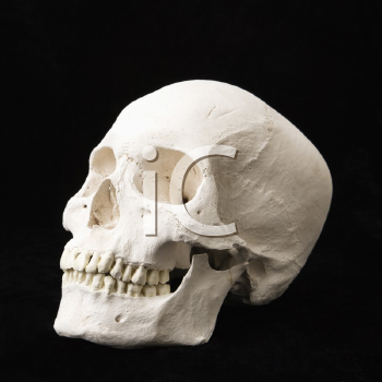 Royalty Free Photo of a Human skull with teeth