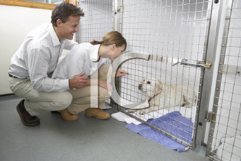 Royalty Free Photo of a Couple Visiting a Dog in a Kennel