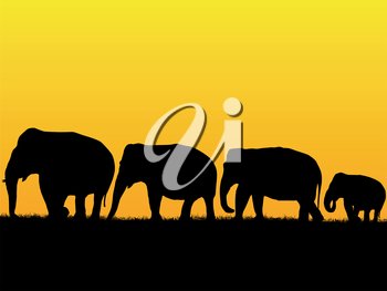 African sunset background with elephant herd