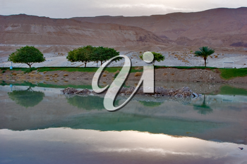 Royalty Free Photo of the Coast of the Dead Sea