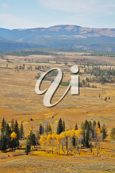 Autumn in Yellowstone national park. Steppe, trees and mountains in the distance