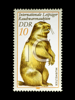 Royalty Free Photo of a Marmot on a Stamp from East Germany