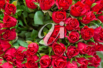 bouquet of natural roses background