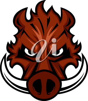 Fierce angry wild boar head with glaring eyes and curving tusks, cartoon vector illustration