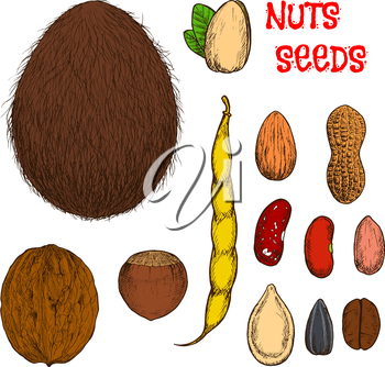Sweet almond, hazelnut, walnut and pistachio nuts, coconut fruit, roasted coffee, peanuts with shell and common beans with pod, dry pumpkin and sunflower seeds retro stylized colored sketches. Use as