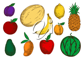 Fresh red apples and violet plum, fragrant mango, banana and melon, juicy lemon, pineapple and peach, ripe green avocado and watermelon fruits sketch icons. Tasty and healthy food design