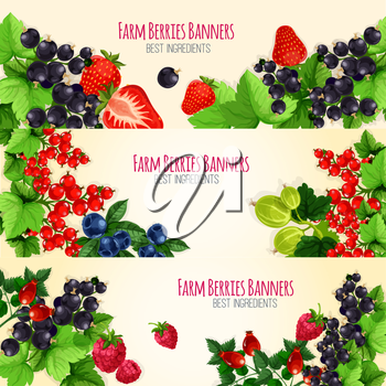 Berries vector banners with fresh garden and farm berries of blackberry and forest blueberry, black currant or redcurrant, cherry, raspberry and strawberry, sweet juicy gooseberry and briar fruits har