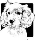 Royalty Free Clipart Image of a Cocker Spaniel