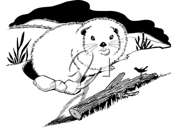Groundhog Illustration