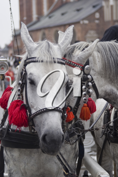 Two beautiful harnessed horses with little bells