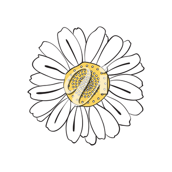 Illustration of hand drawn daisy, isolated on white background