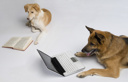 Dog using a laptop with another dog reading a book
