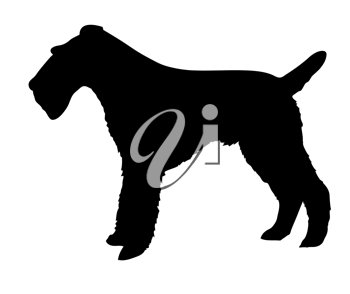Royalty Free Clipart Image of a Fox Terrier