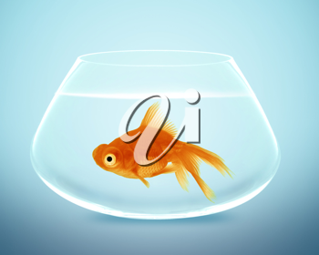 goldfish in small bowl and looking for something better.