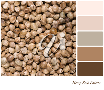 A background of dried hemp seeds in a colour palette with complimentary colour swatches