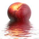 Single dark-red peach in water. Close-up. Studio photography.