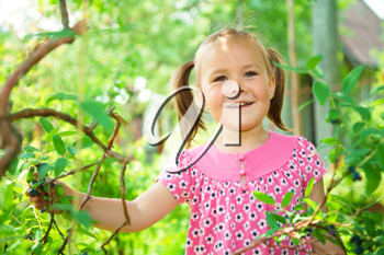 Royalty Free Photo of a Little Girl Picking Berries