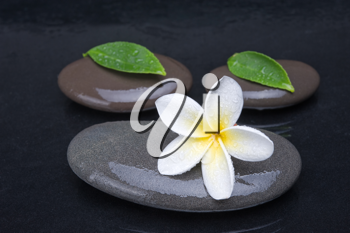 zen stones with frangipani flower on black  background
