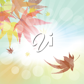 Autumn  Frame With Falling  Maple Leaves on Sky Background. Elegant Design with Rays of Sun and Ideal Balanced Colors. Vector Illustration.