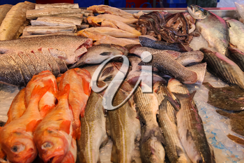 Sale of fresh seafood in the street market. Utrecht, the Netherlands