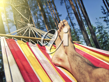 feet in the hammock on a background of pine forest