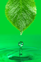 Royalty Free Photo of a Leaf