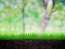 Growing grass in the soil in the park