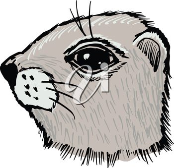 hand drawn, sketch, cartoon illustration of gopher