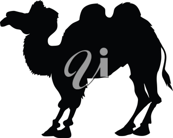 silhouette of bactrian camel