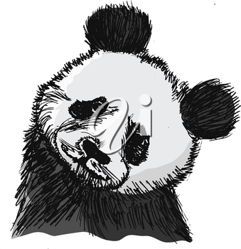 vector, coloured, sketch, hand drawn image of panda