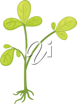 an illustration of a plant