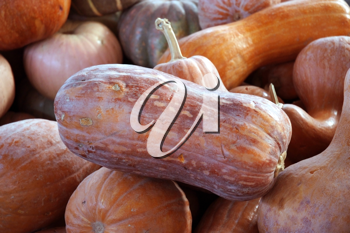 Royalty Free Photo of a Pile of Squash