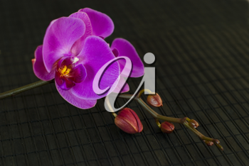 Royalty Free Photo of Orchids