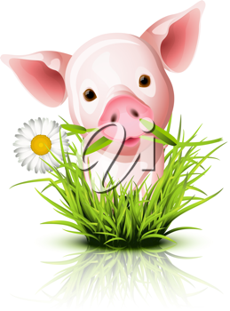 Royalty Free Clipart Image of a Pig Standing in Grass