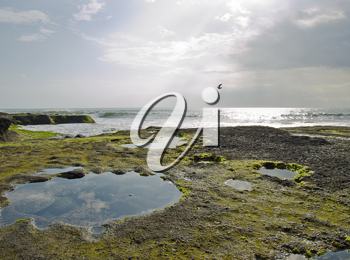 Bali rocky ocean coast covered with algae