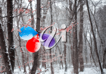 Birthday balloons hanging on the tree in snowy forest