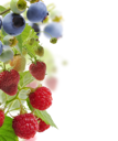 Royalty Free Photo of Berry Plants