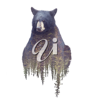 Bear and Forest. Watercolor Double Exposure effect on white background