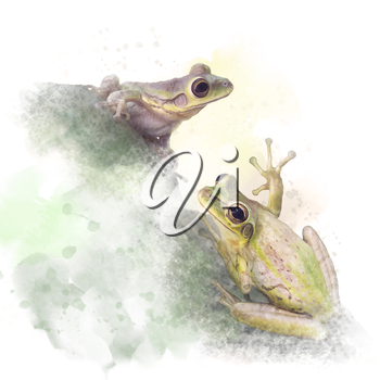 Two Tree Frogs watercolor on white background