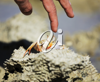 Royalty Free Photo of a Crab