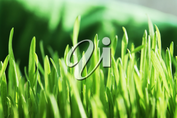 Royalty Free Photo of Grass