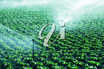 Royalty Free Photo of a Field Being Watered