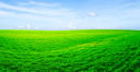 Royalty Free Photo of a Green Field