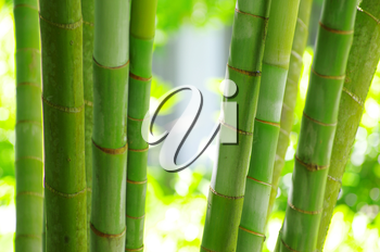 Bamboo isolated on a green
