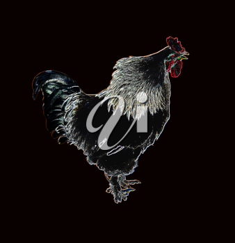 Royalty Free Photo of a Drawing of a Cock