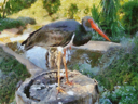 Royalty Free Photo of a Painting of a Stork