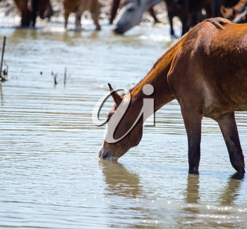 Horse on watering places on the lake .